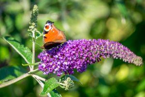 vlinder moeiteloos leven Effortless coaching