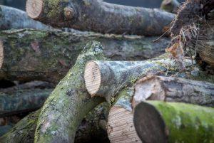 blokkade, belemmering, hout