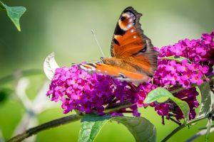 stress verminderen vlinder in de natuur